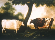 Two Shorthorn Cattle: The White Heifer which Travelled & Red Rose, 1806