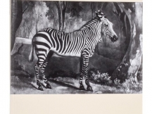 The Engraved Works of George Stubbs